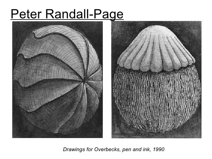 Peter Randall-Page        Drawings for Overbecks, pen and ink, 1990