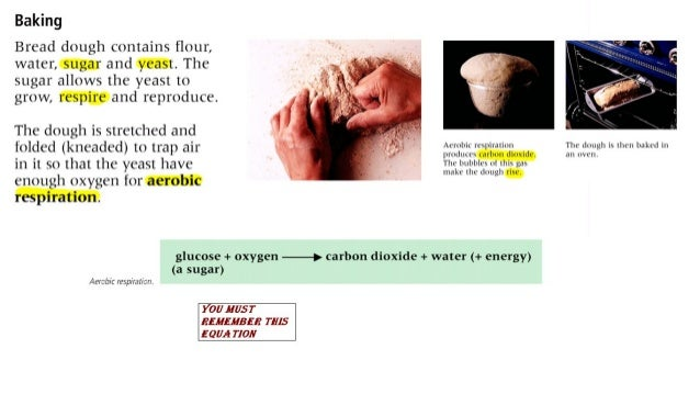 Baking  Bread dough contains flour,  water,  sugar and yeast.  The sugar allows the yeast to grow,  respire and reproduce....