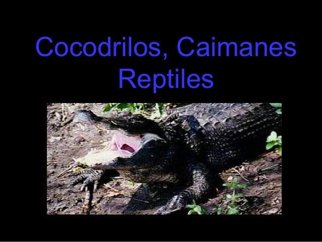 Cocodrilos, Caimanes      Reptiles