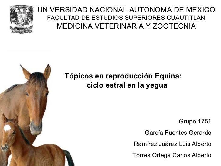 Tópicos en reproducción Equina: ciclo estral en la yegua Grupo 1751 García Fuentes Gerardo Ramírez Juárez Luis Alberto Tor...