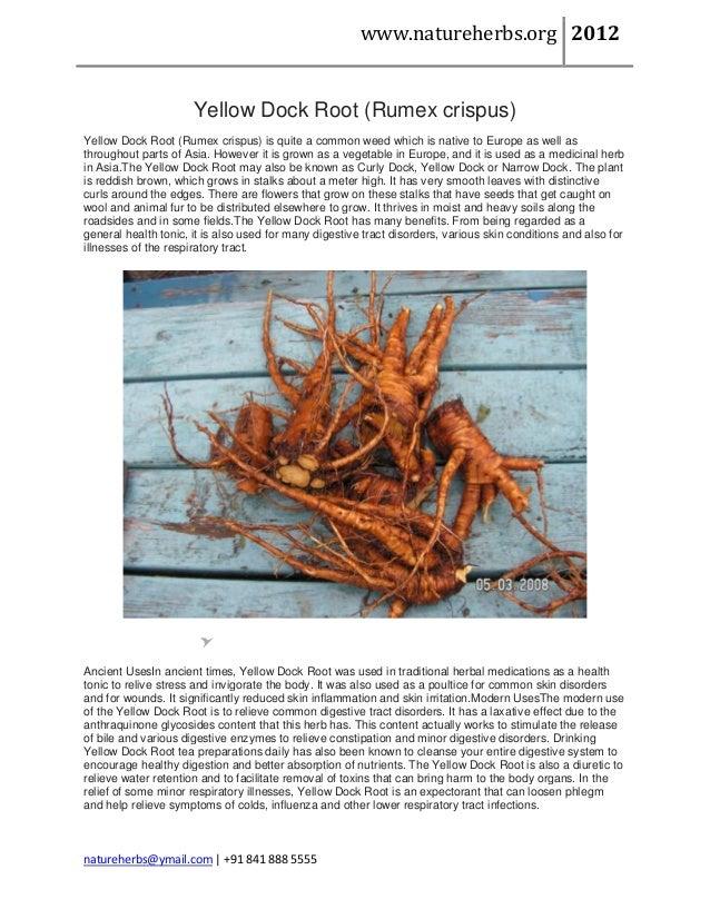 www.natureherbs.org 2012                      Yellow Dock Root (Rumex crispus)Yellow Dock Root (Rumex crispus) is quite a ...