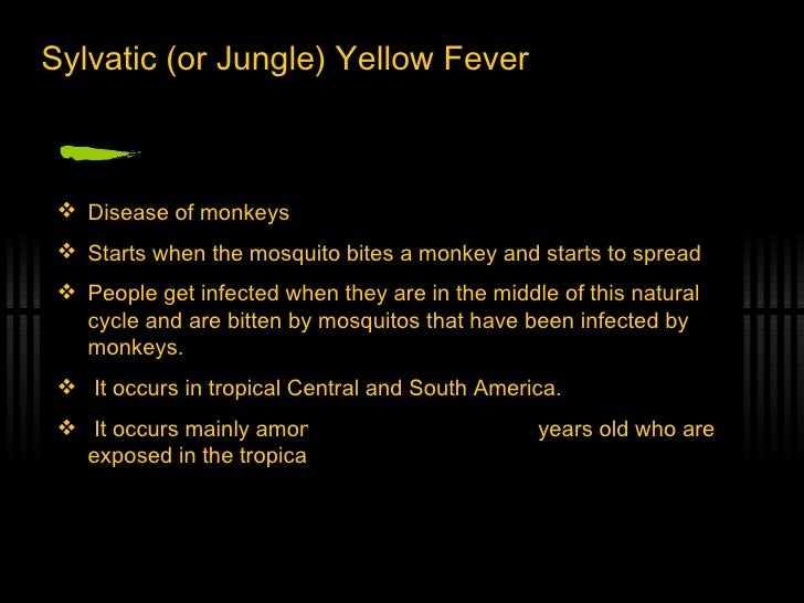 Yellow Fever Jungle Fever