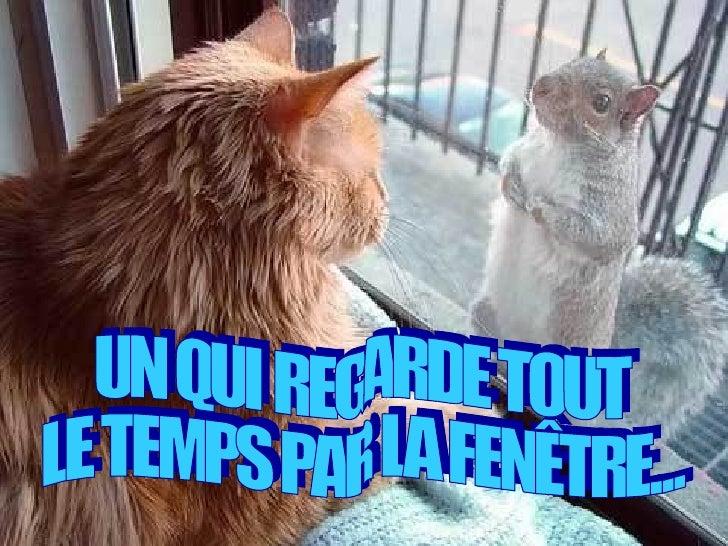 UN QUI REGARDE TOUT  LE TEMPS PAR LA FENÊTRE...