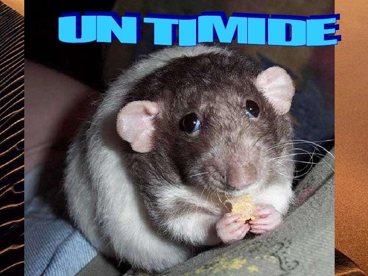 UN TIMIDE