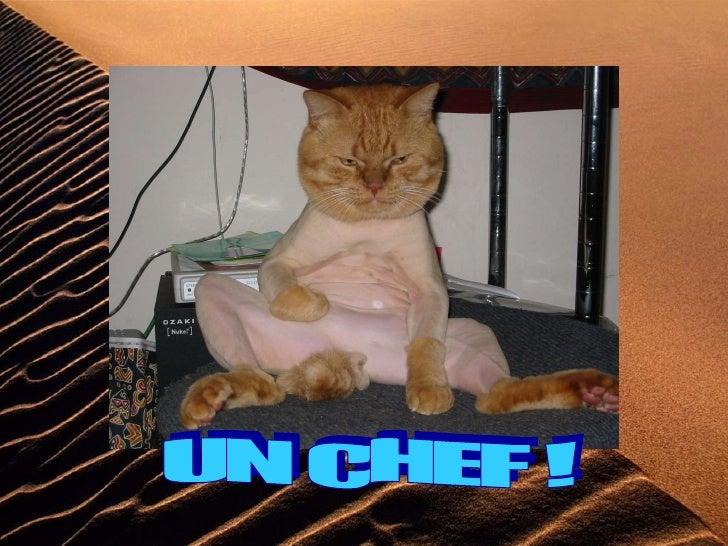 UN CHEF !