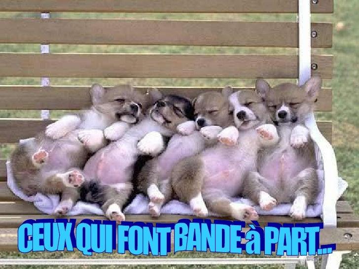CEUX QUI FONT BANDE à PART...
