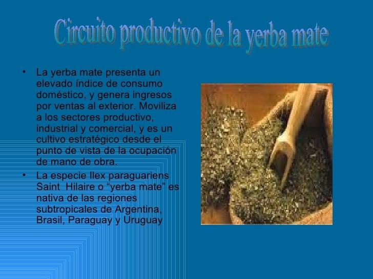 Circuito Productivo De La Yerba Mate : Yerba mate
