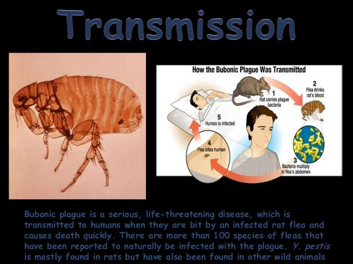 symptoms and causes of bubonic plague The bubonic plague bacterium then infects a new person and the flea eventually dies from starvation symptoms, causes, pictures of bubonic plague.