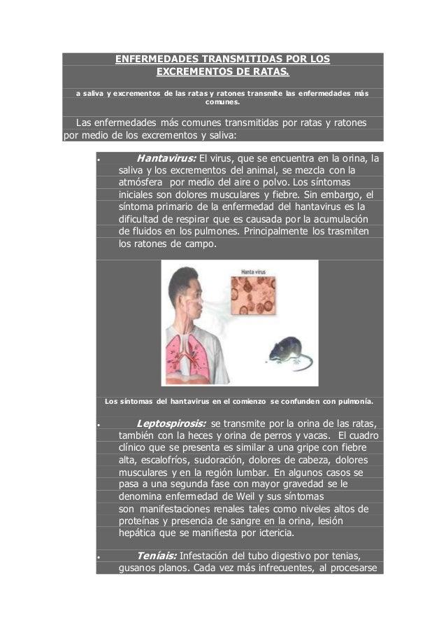ENFERMEDADES TRANSMITIDAS POR LOS EXCREMENTOS DE RATAS. a saliva y excrementos de las ratas y ratones transmite las enferm...