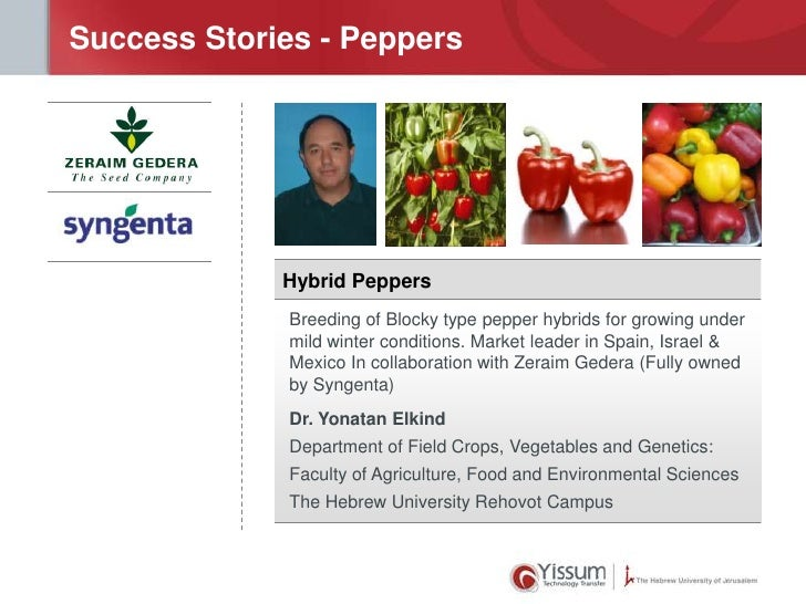 Success Stories - Peppers             Hybrid Peppers             Breeding of Blocky type pepper hybrids for growing under ...