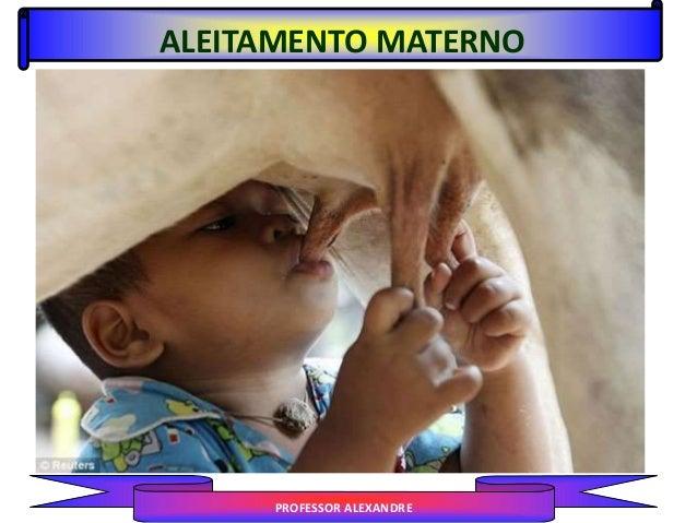 ALEITAMENTO MATERNO PROFESSOR ALEXANDRE
