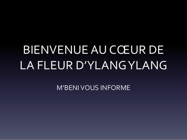 BIENVENUE AU CŒUR DE LA FLEUR D'YLANG YLANG M'BENI VOUS INFORME