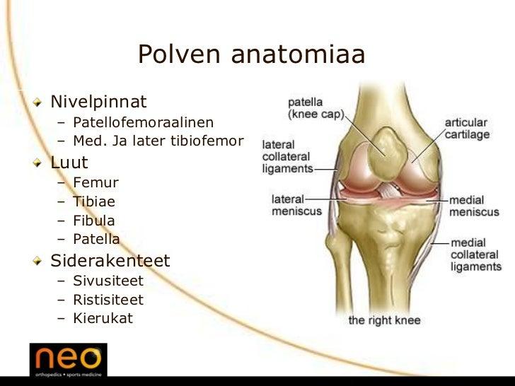 Tyypilliset urheilijan nilkka- ja polvivammat ja niiden ennaltaehkäisy Slide 3