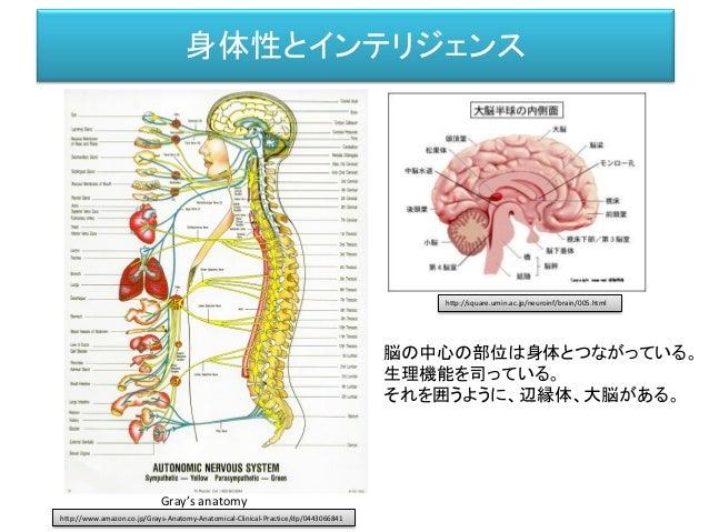 身体性とインテリジェンス Gray's anatomy 脳の中心の部位は身体とつながっている。 生理機能を司っている。 それを囲うように、辺縁体、大脳がある。 http://square.umin.ac.jp/neuroinf/brain/00...
