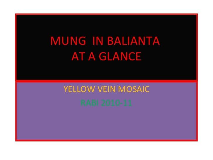 YELLOW VEIN MOSAIC RABI 2010-11 MUNG  IN BALIANTA  AT A GLANCE