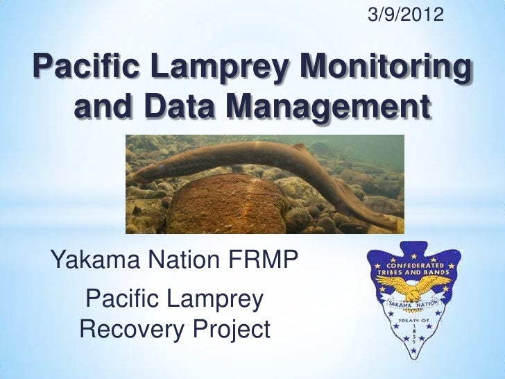 3/9/2012Pacific Lamprey Monitoring  and Data Management Yakama Nation FRMP   Pacific Lamprey   Recovery Project