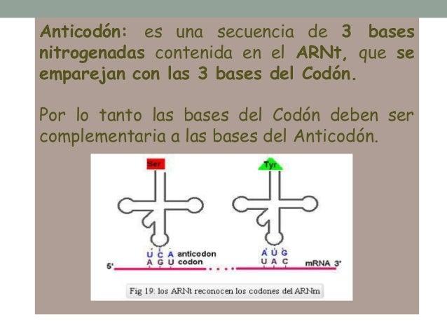 Anticodon Definicion Pdf