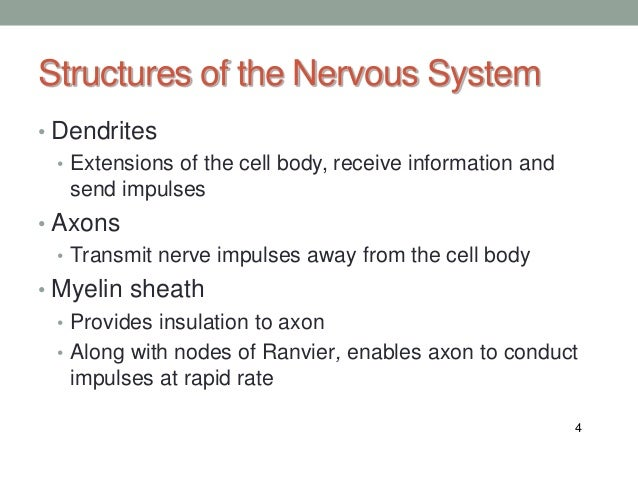 nervous system diseases Nervous system functions, organs and diseases: the nervous system is a network of specialized cells that communicate information about an organism's.