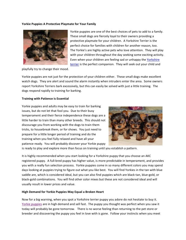 Yorkie Puppies A Protective Playmate for Your Family                                      Yorkie puppies are one of the be...