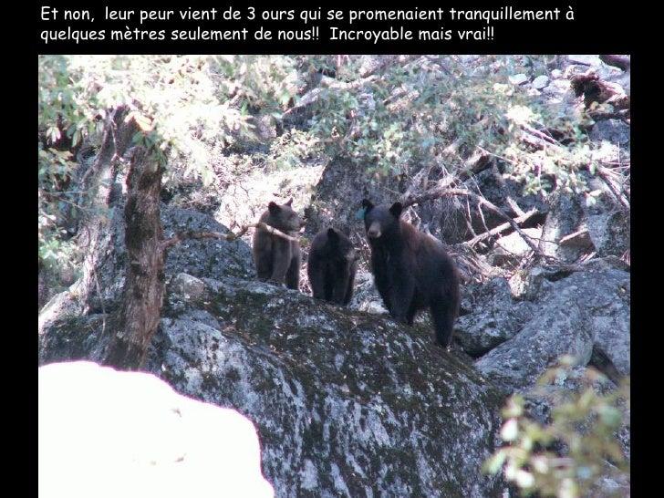 Et non,  leur peur vient de 3 ours qui se promenaient tranquillement à quelques mètres seulement de nous!!  Incroyable mai...