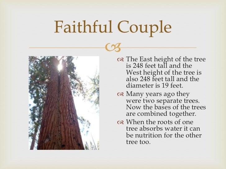 Image result for faithful couple yosemite