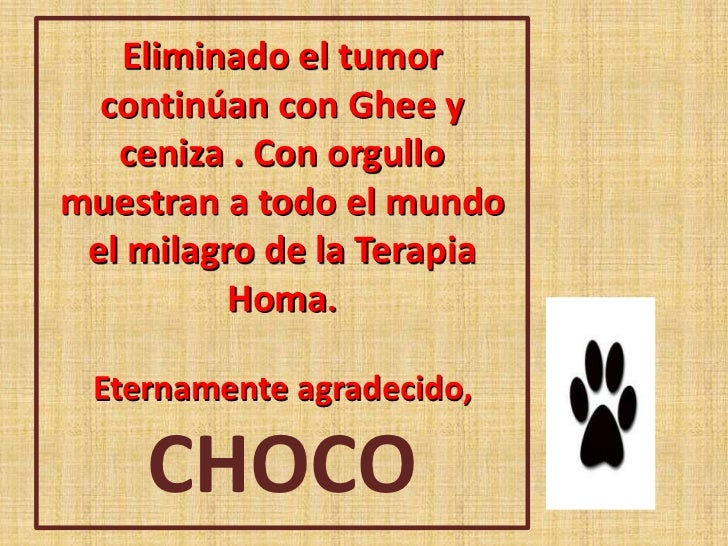 Yo soy chocolate el perro homa