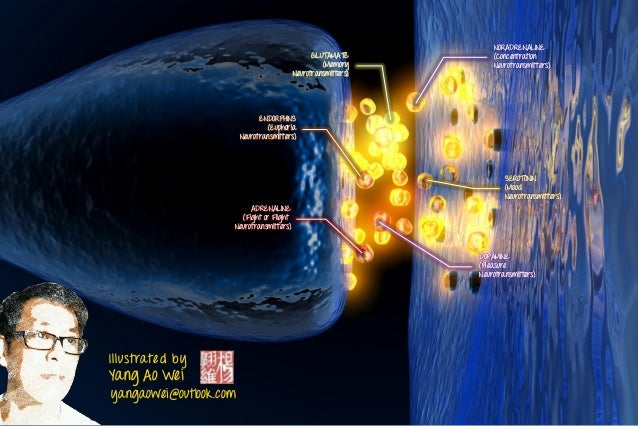Illustrated by Yang Ao Wei yangaowei@outlook.com ADRENALINE (Fight or Flight Neurotransmitters) SEROTONIN (Mood Neurotrans...