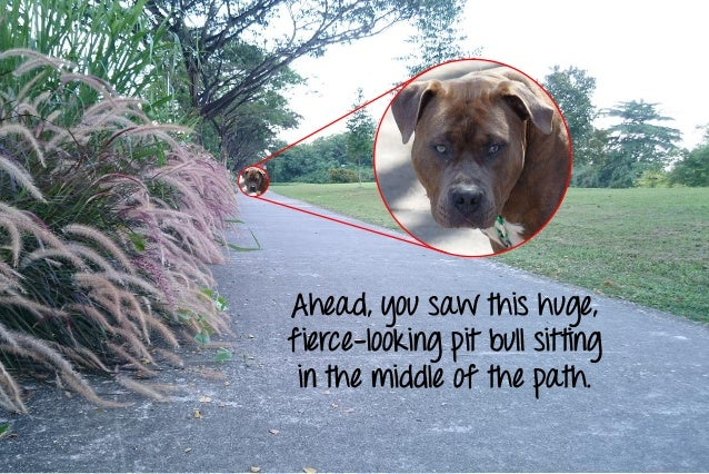 Ahead, you saw this huge, fierce-looking pit bull sitting in the middle of the path.