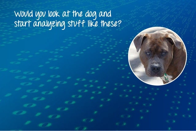 Would you look at the dog and start analyzing stuff like these?