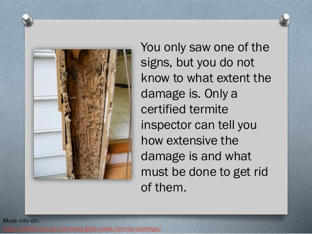 how to tell if you have termites in your house