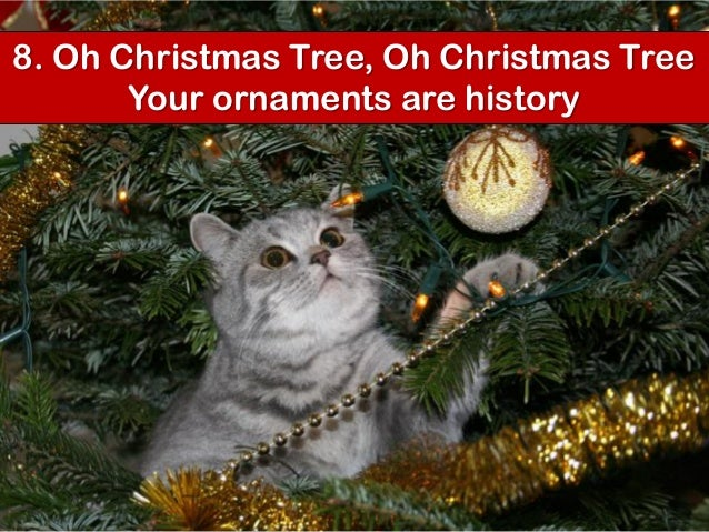 Your cat's top 10 christmas songs