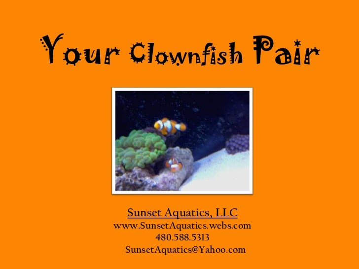 FREE Clownfish Pair<br />w/ aquarium purchase or aquarium upgrade<br />w/ aquarium purchase or aquarium upgrade<br />Sunse...