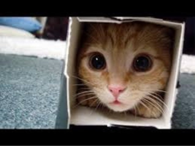 Youtube funniest cat videos
