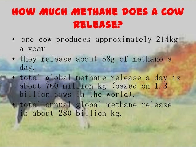 cow methane project leif