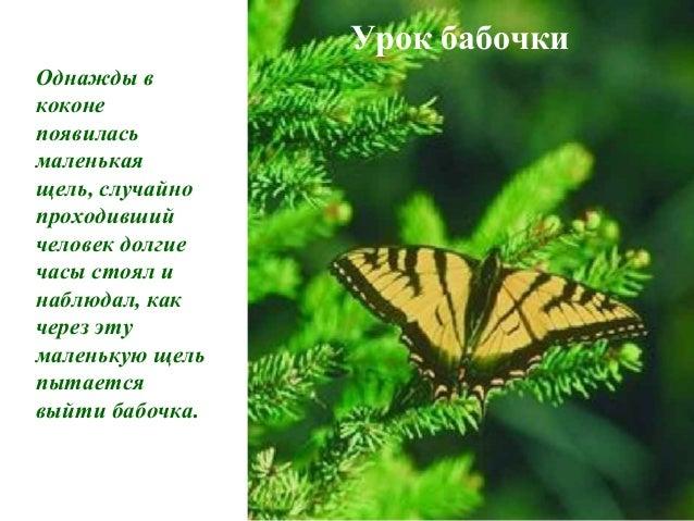 Урок бабочки Однажды в коконе появилась маленькая щель, случайно проходивший человек долгие часы стоял и наблюдал, как чер...
