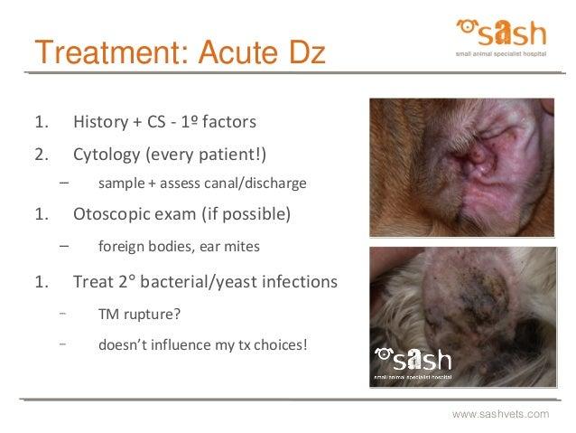SASH : Tricky infections by Dr Linda Vogelnest