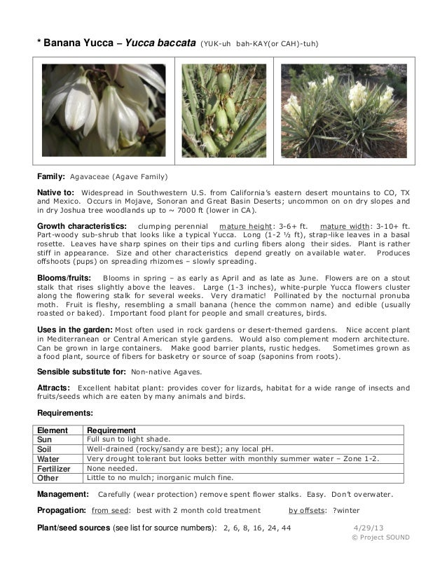 * Banana Yucca – Yucca baccata  (YUK-uh bah-KAY(or CAH)-tuh)  Family: Agavaceae (Agave Family) Native to: Widespread in So...