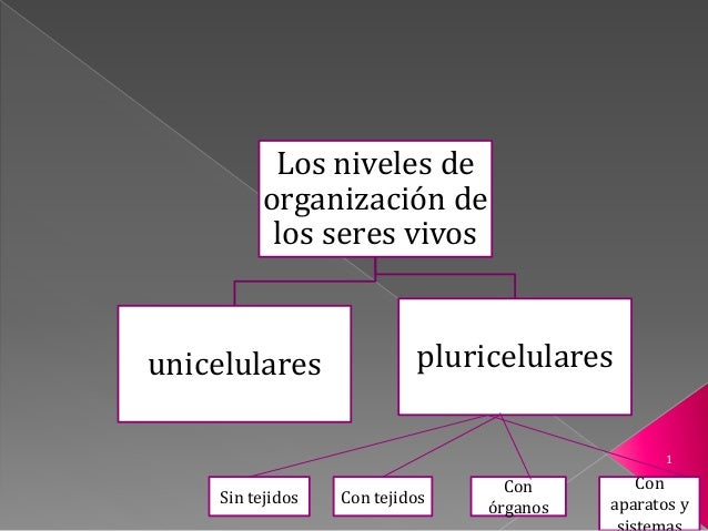 Los niveles de organización de los seres vivos unicelulares pluricelulares Sin tejidos Con tejidos Con órganos Con aparato...