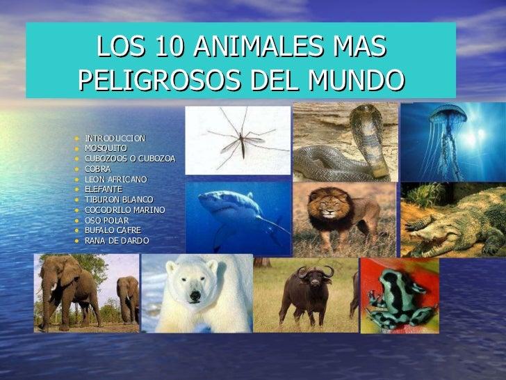 LOS 10 ANIMALES MAS PELIGROSOS DEL MUNDO <ul><li>INTRODUCCION </li></ul><ul><li>MOSQUITO </li></ul><ul><li>CUBOZOOS O CUBO...