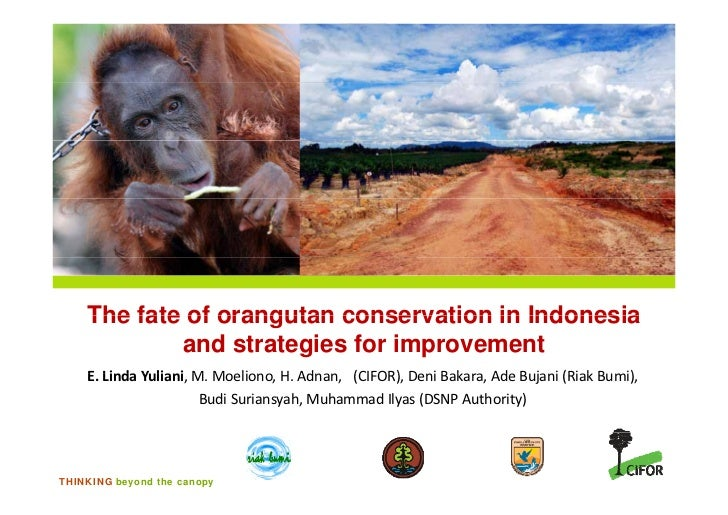 The fate of orangutan conservation in Indonesia            and strategies for improvement    E. Linda Yuliani, M. Moeliono...