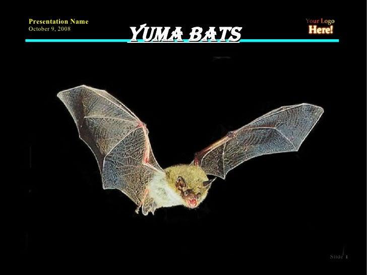 Yuma bats