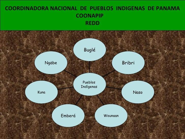 COORDINADORA NACIONAL  DE  PUEBLOS  INDIGENAS  DE PANAMA COONAPIP  REDD Ngäbe Kuna Emberá Wounaan Naso Bribri Buglé Pueblo...