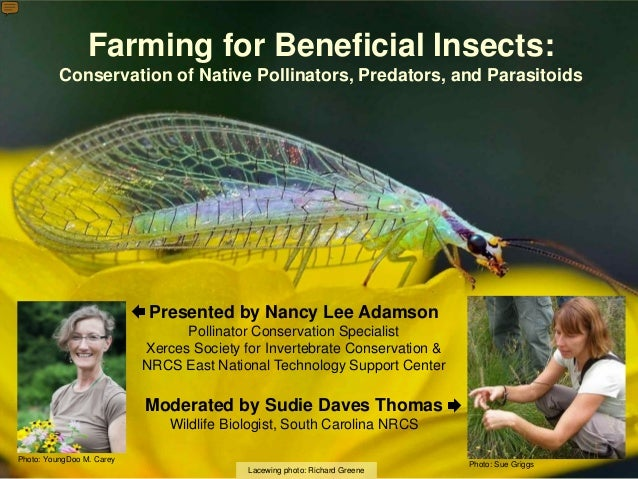 Farming for Beneficial Insects: Conservation of Native Pollinators, Predators, and Parasitoids Lacewing photo: Richard Gre...