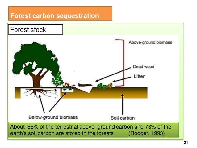 Forest climate change abatement final for 0 4 soil carbon