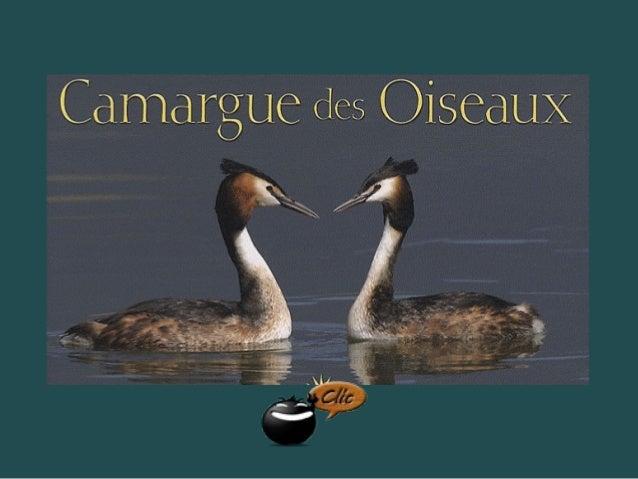 La Camargue héberge 350 espèces d'oiseaux sédentaires et migrateurs