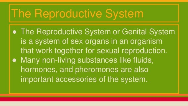 why is the reproductive system important