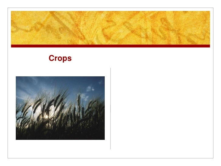 Crops<br />