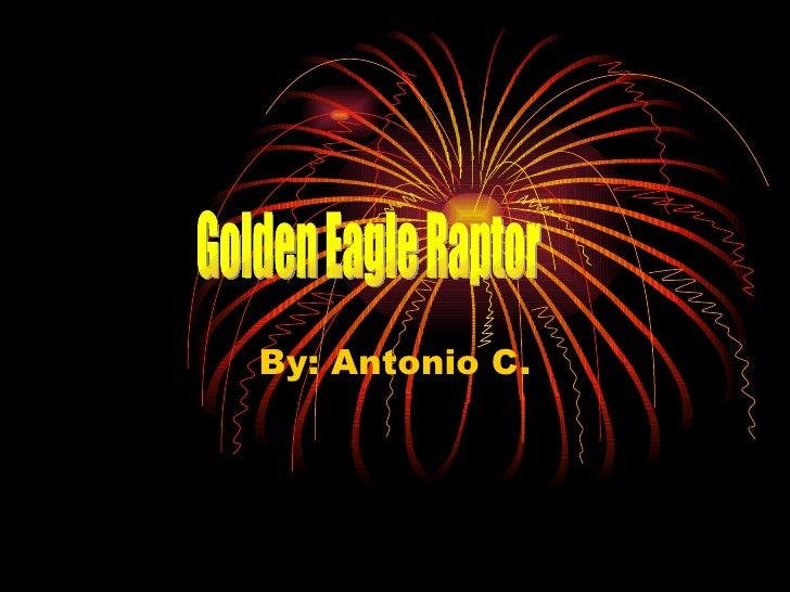 By: Antonio C. Golden Eagle Raptor