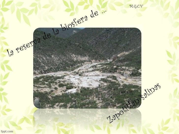 la reserva de la biosfera de … Zapotitlán salinas