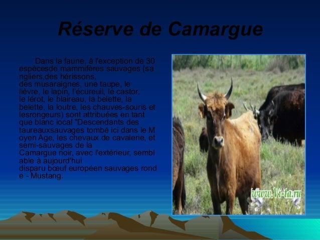 RéservedeCamargue Dans la faune, à l'exception de 30 espècesde mammifères sauvages (sa ngliers,des hérissons, des musara...